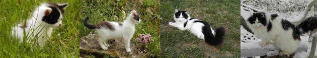 Gesundes Katzenleben